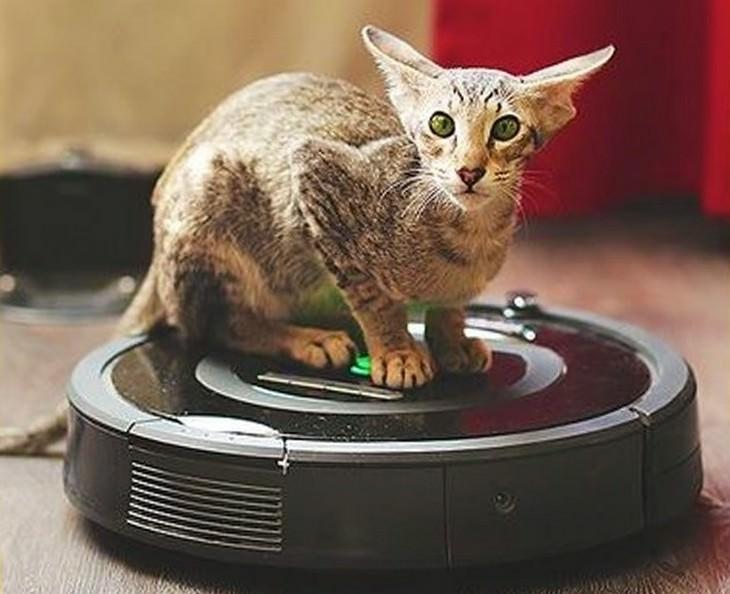 19 dos gatos mais caros de qualquer lugar do mundo