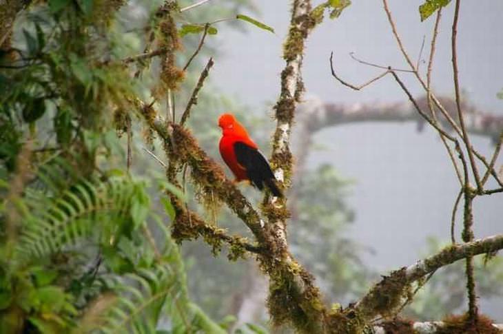 As belezas da Amazônia e seu ecossistema