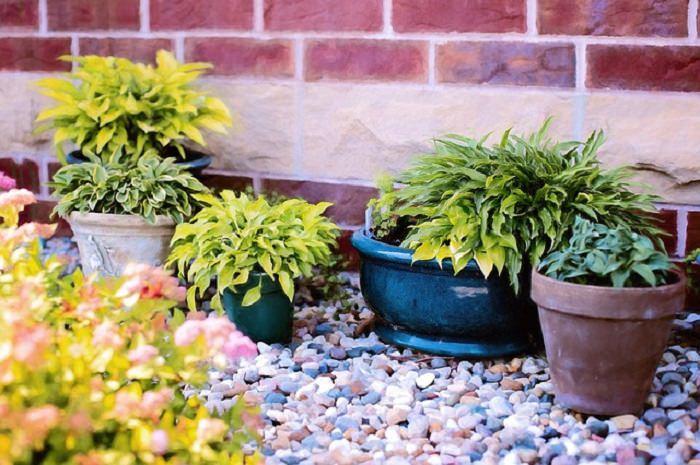 sintomas da planta