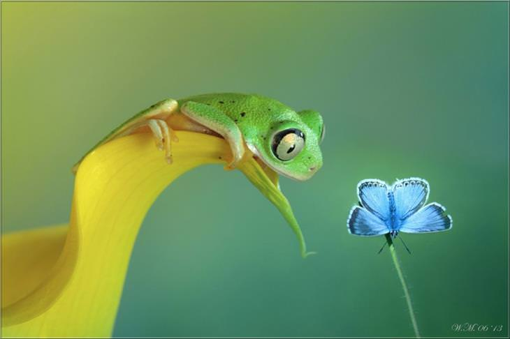 macrofotografias incríveis da natureza