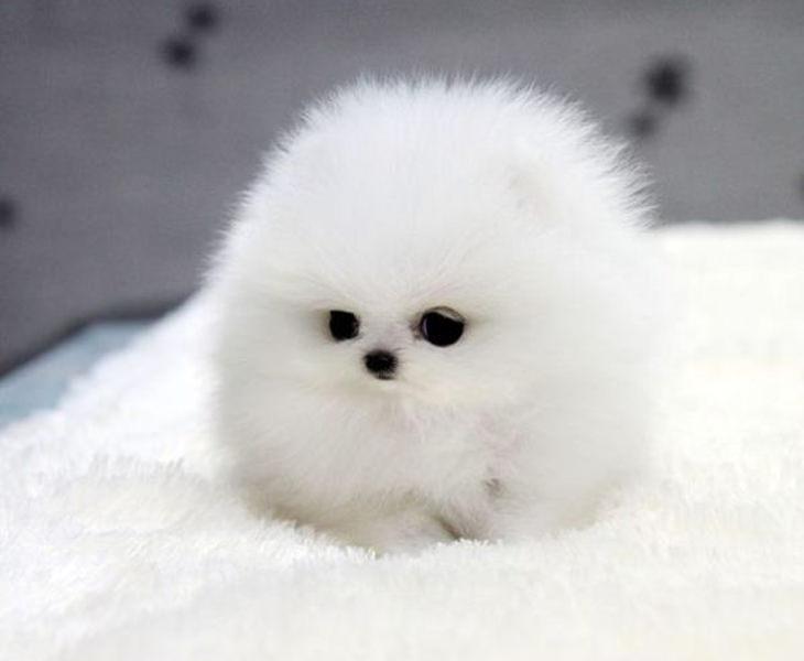 23 das mais bonitas fotos de filhotes de cães