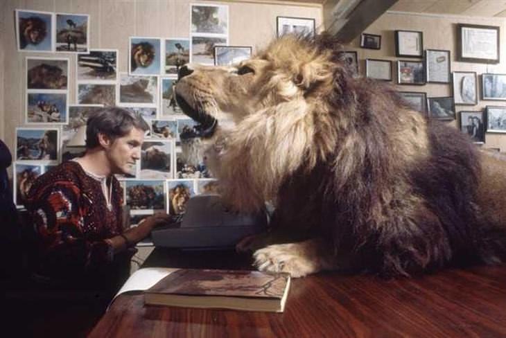 Quando Uma Família Tem Um Leão de Estimação?