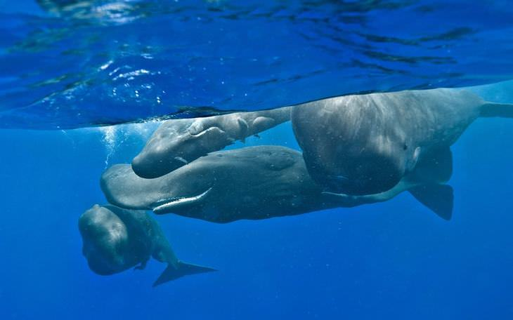 Fotos belíssimas de baleias & golfinhos majestosos