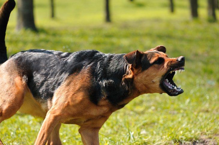 estresse em cães