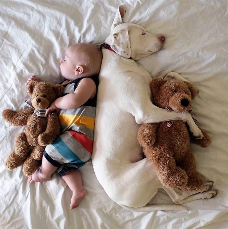 cão e bebê
