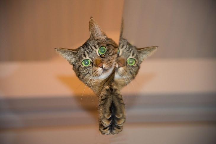 Qual é a personalidade do seu gato?