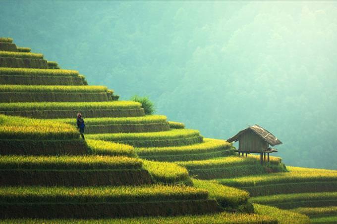 Asian layered fields