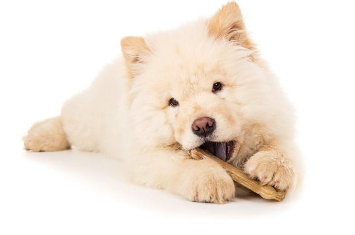 dente do cachorro