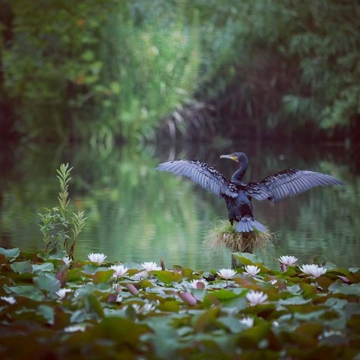 fotos naturais de kunito imai
