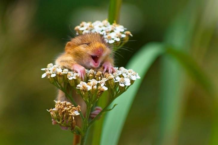 animais engraçados