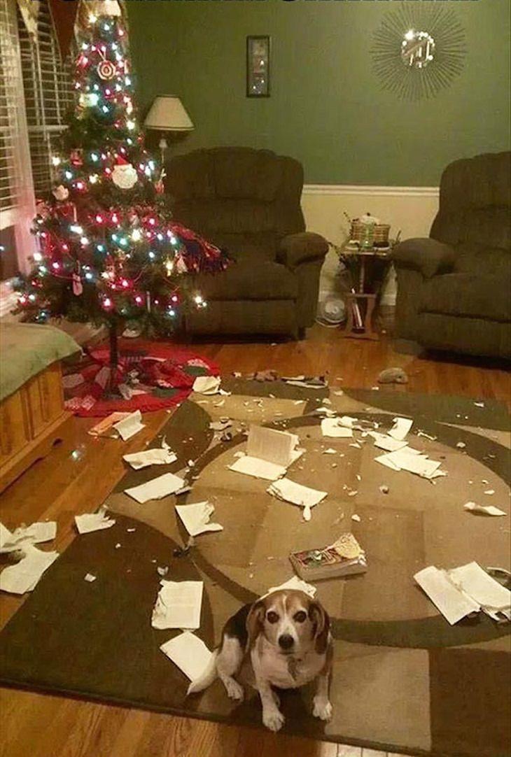 animais hilarios no natal