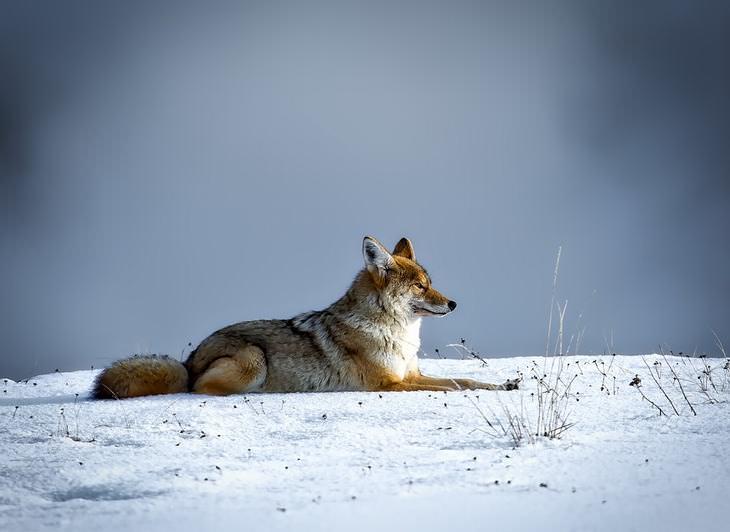 8 melhores locais do mundo para apreciar a vida selvagem