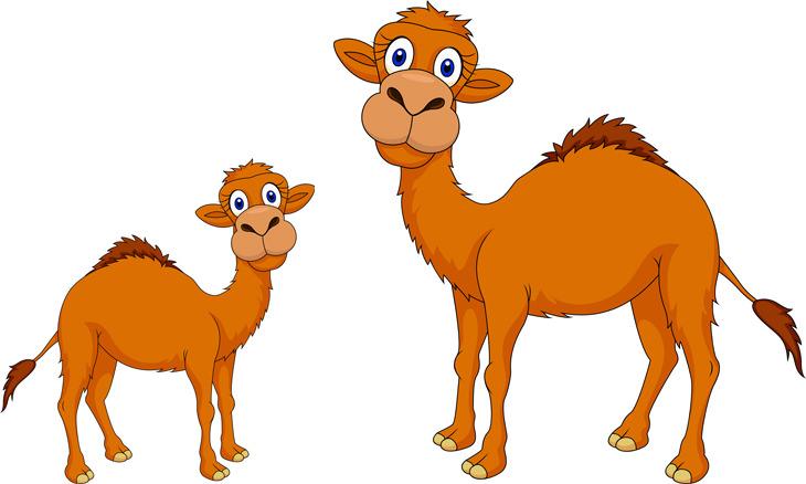 piada de camelo