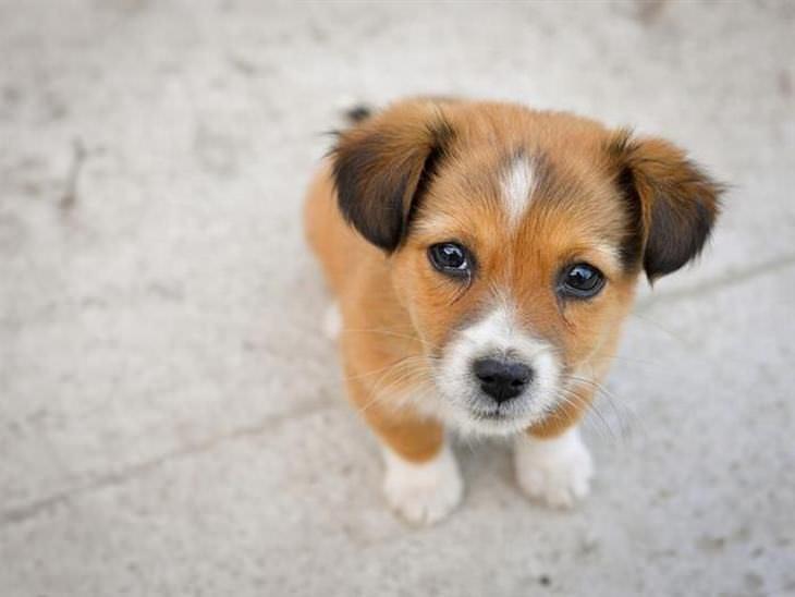 O olhar desses cãezinhos vão derreter seu coração