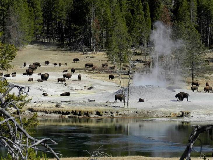 yellowstone estados unidos