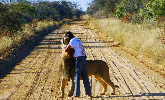 O homem que tem como animal de estimação um leão