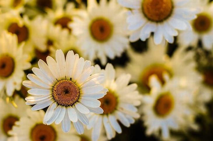 borboletas que atraem flores