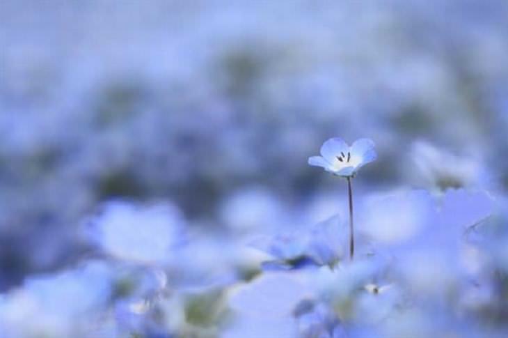 A Bela Natureza em Azul