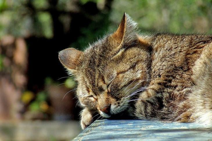 Sinais que seus animais de estimação estão doentes