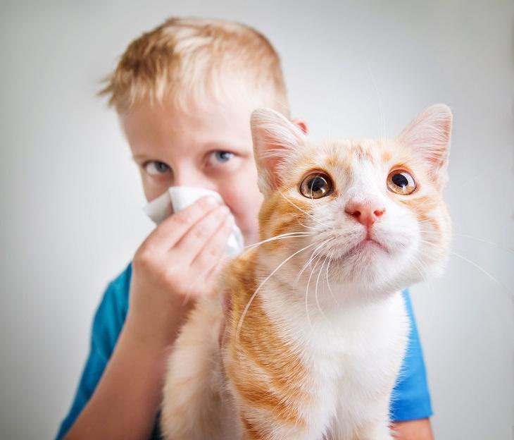 8 Desvantagens Relativamente Desconhecidas do Uso de Sanitizantes de Mãos