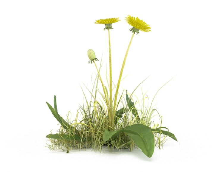 Herbicidas naturais para erva daninhas