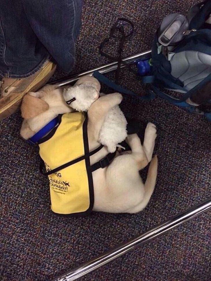 Primeiro dia de trabalho de filhotes de cães fofos