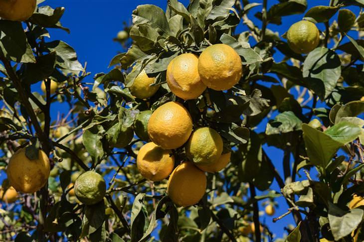 20 Usos Práticos do Limão