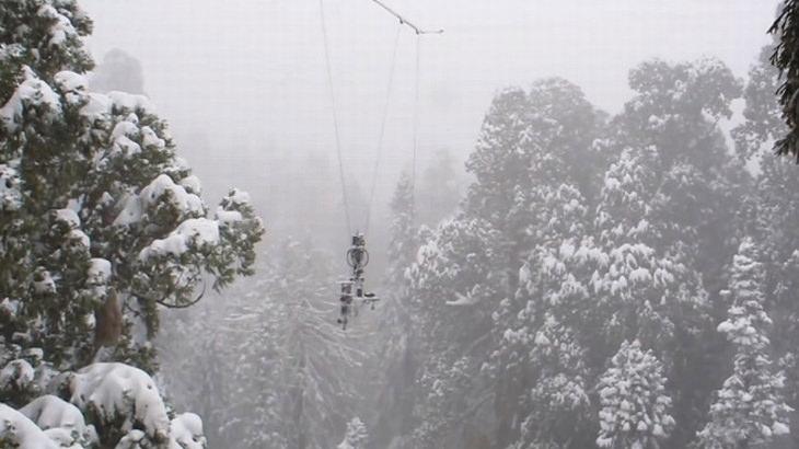 The President a maior sequoia do mundo foto national geographic