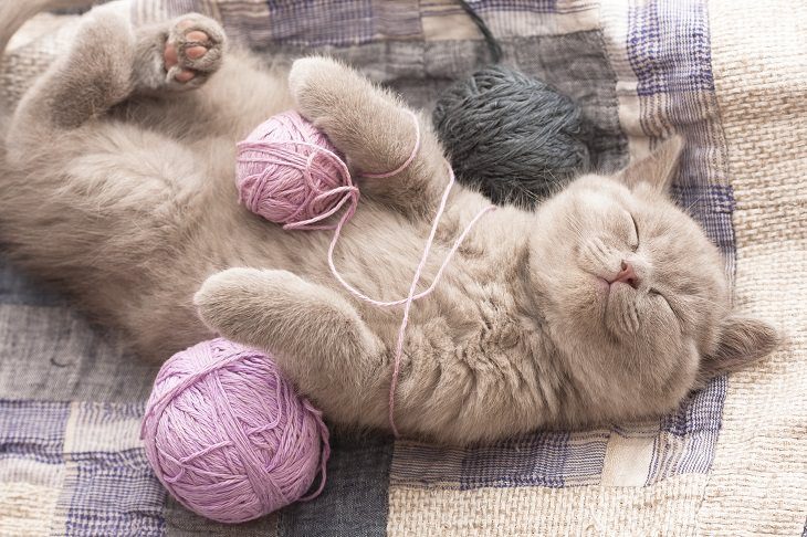 gatos de estimação fazem bem à saúde