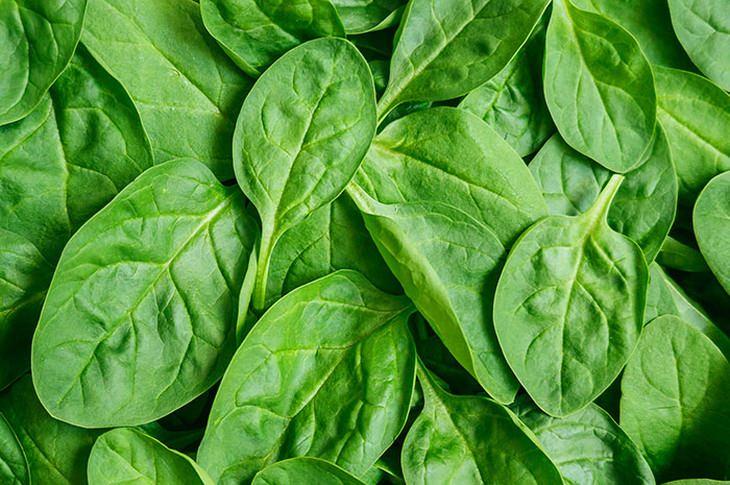 Folhas de espinafre podem se tornar substituições de tecidos humanos