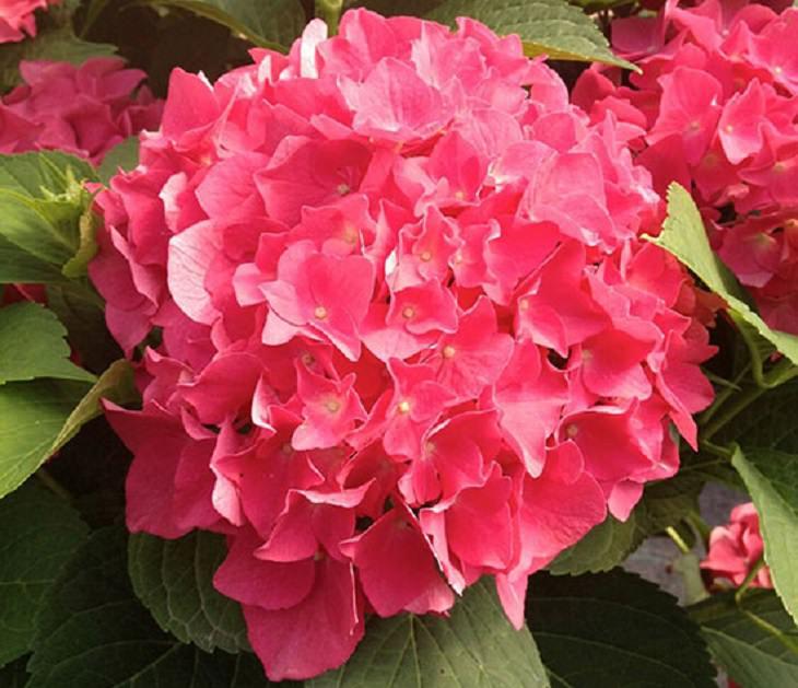 7 flores para o seu jardim