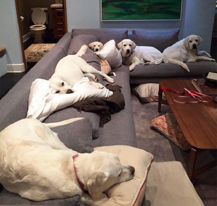 Fotos que mostram como é a vida de um cão