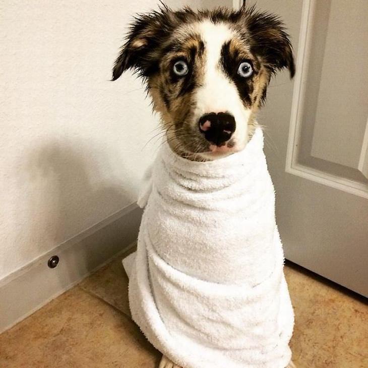 12 Fotos adoráveis da hora do banho de animais de estimação