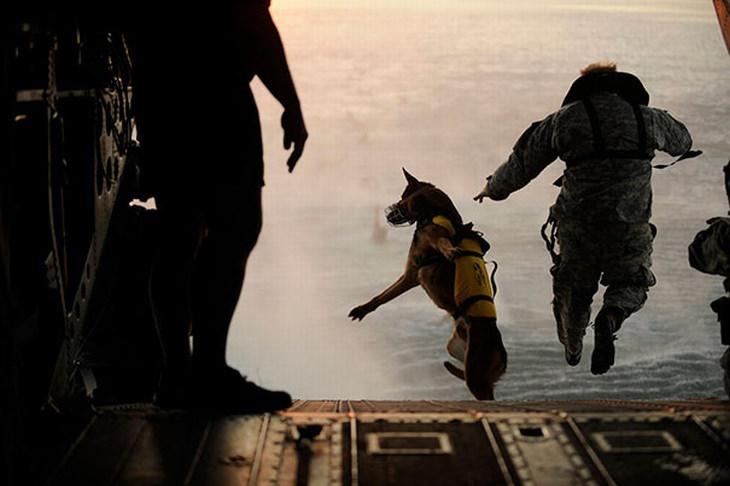 20 Fotos mostrando a coragem e devoção de cães em serviço