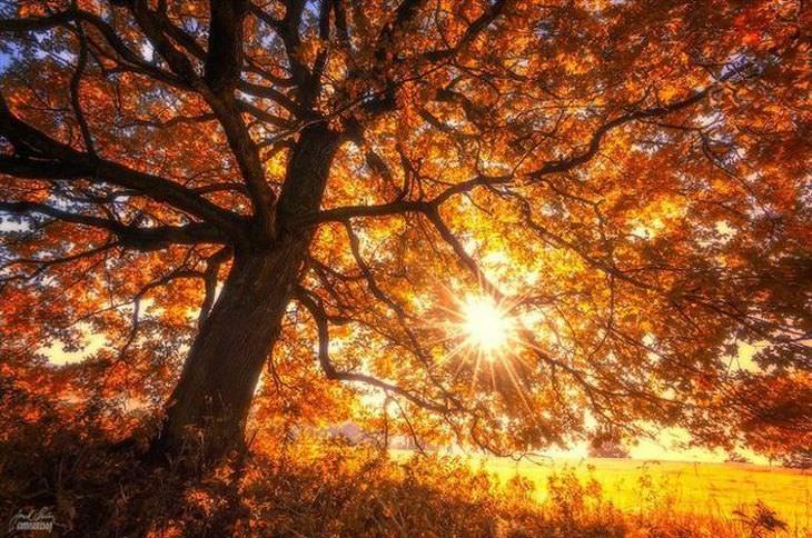 Fotosda beleza do outono no leste europeu
