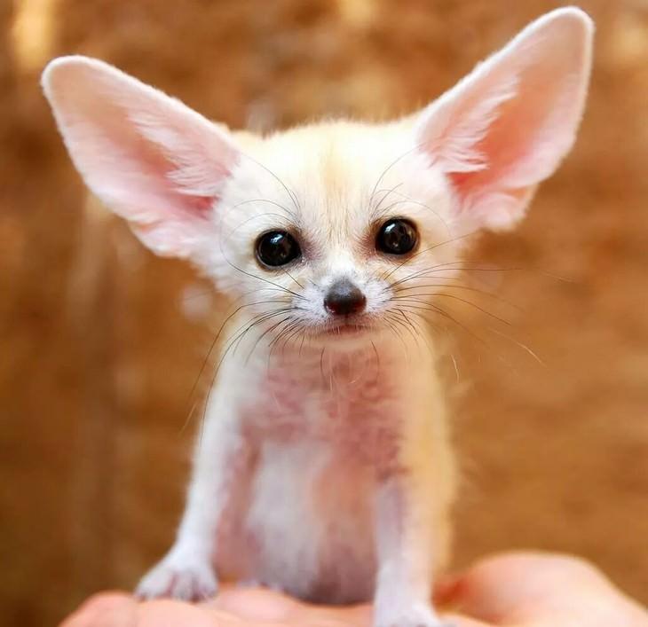 15 fotos de filhotes de animais que vai alegrar seu coração