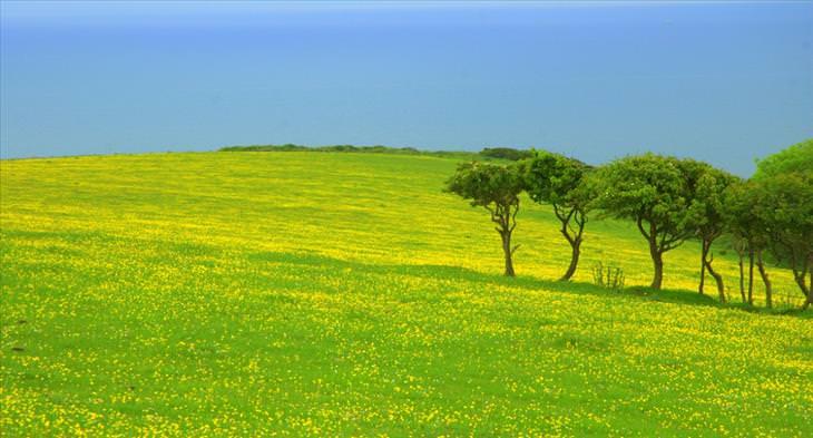 Os belíssimos campos na Inglaterra
