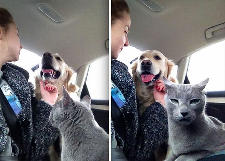 16 expressões divertidas de gatos