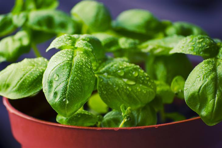10 alimentos que não devem ir a geladeira