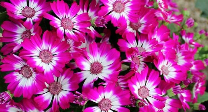 as melhores flores de outono para o seu jardim