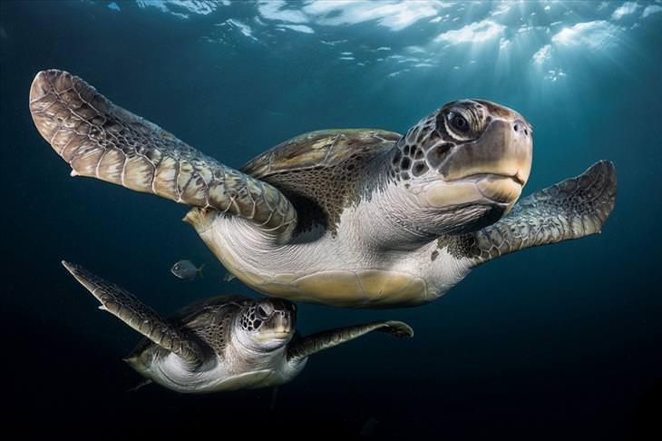 Concurso de Fotografia Subaquática 2017