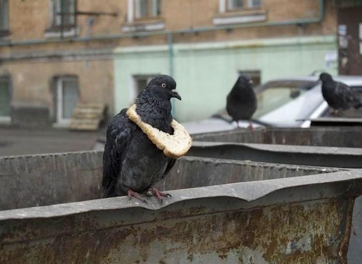 falsas curiosidades hilárias do mundo animal