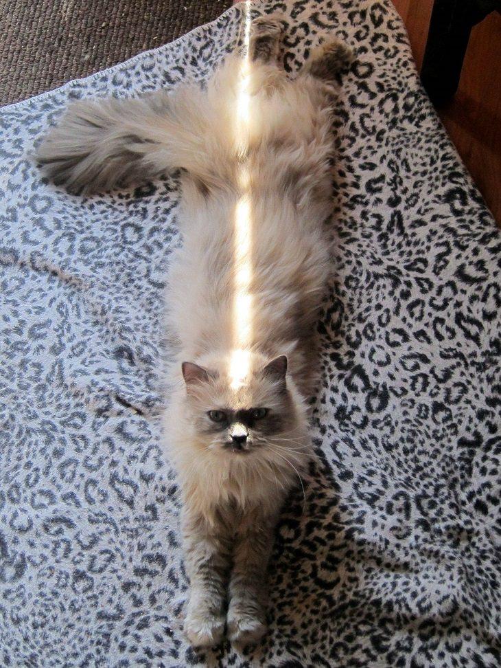 Os gatos fofos que adoram descansar no sol