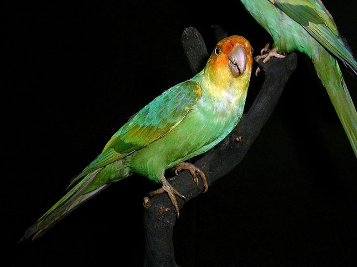12 animais que podem voltar da extinção