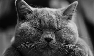 gato com olhos fechados