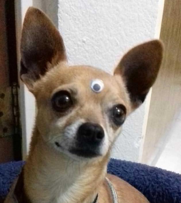 fotos de cachorros fofos e adoráveis tudoporemail