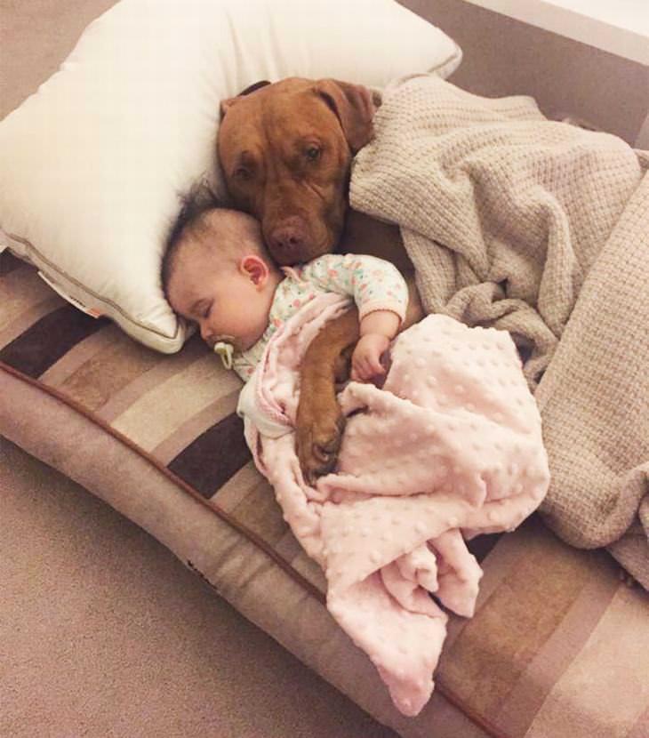 crianças e cachorros fofos na cama tudoporemail