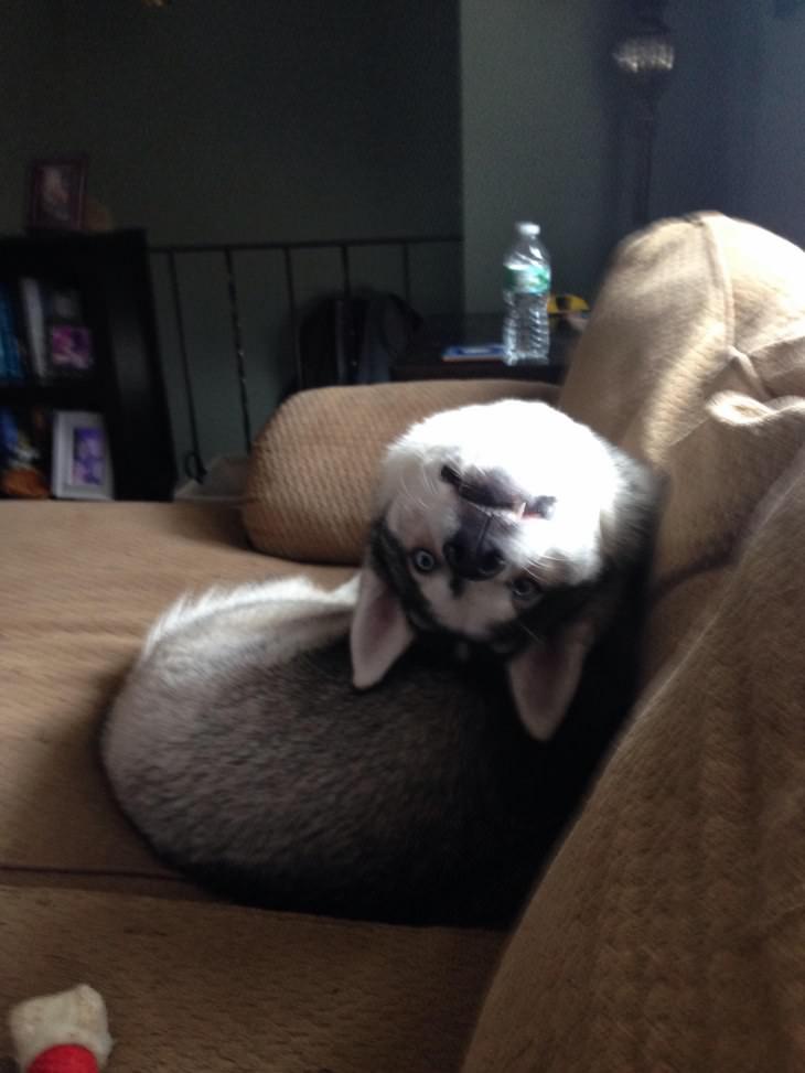 fotos de cachorro