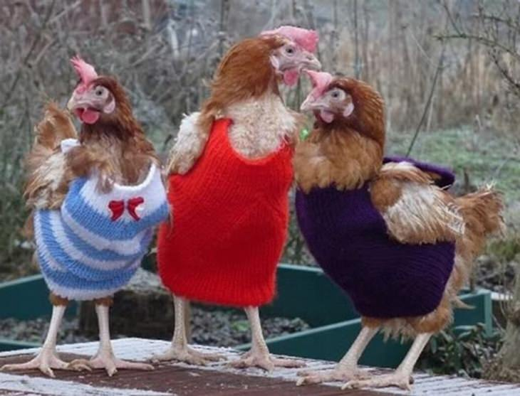 Fotos de animais fofos preparados para o inverno!