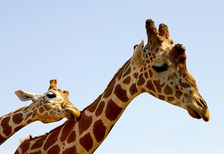 Esses animais querem expressar seu amor
